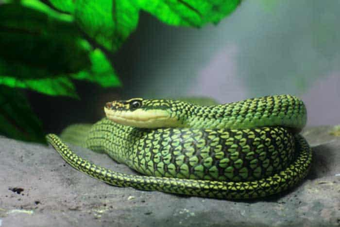 tips for buying a pet snake   world reptiles and amphibian