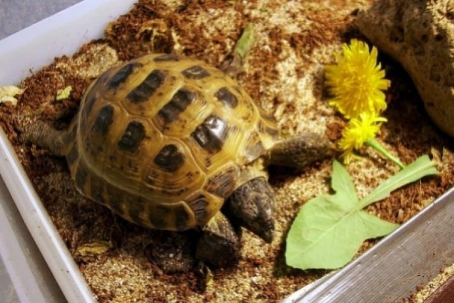 Russian tortoise habitat plants