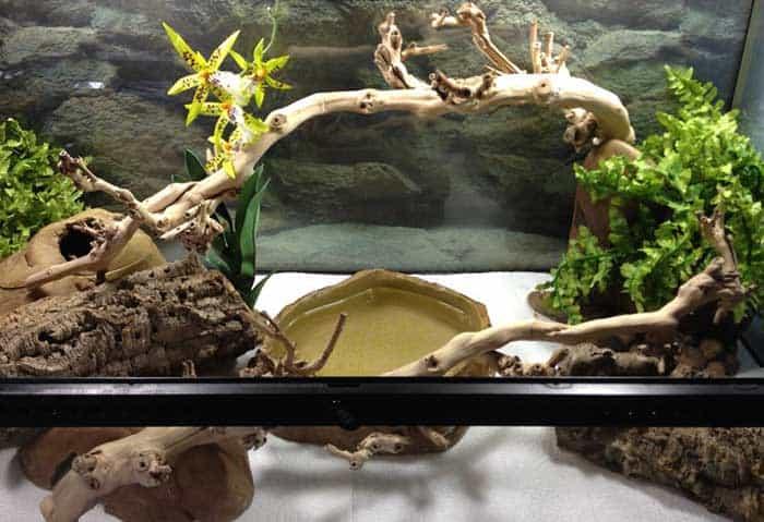 Setting Up Reptile Terrarium For Snake